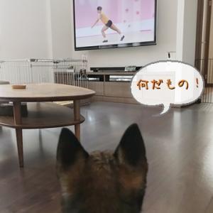 テレビっ子。