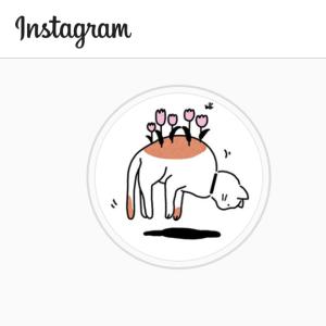 猫ちゃん専用Instagram「かこきゃっと」