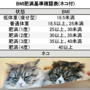 【ダイエット】身長171cmの理想的な目標体重を考察(BMI・芸能人の体重)