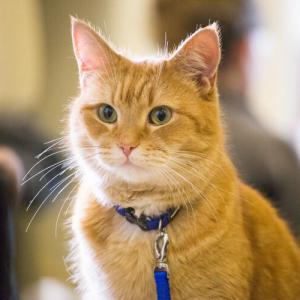 「ボブという名の猫」のボブが死亡 「少なくとも14歳」