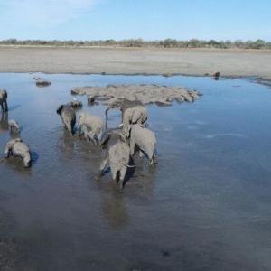 ボツワナで350頭以上のゾウが集団死。死因わからず、さらに増える可能性も
