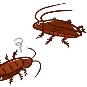 ゴキブリの最盛期は7月から8月、「1匹見つけたら100匹いる」は本当?