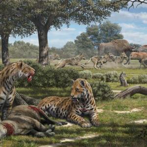 「剣歯」をもつ最古の動物は草食だった、長く鋭い牙の理由