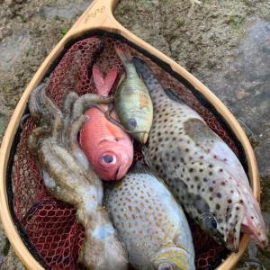 寒すぎて魚が仮死状態に…寒波に襲われた沖縄の海の光景が話題 実は地元ではあるあるらしい