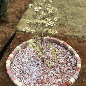 自粛要請だから家族で庭にハナミズキ植えてツリーサークル作った。コロナ休校対策