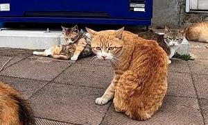 自販機前の猫の集会に参加してきた