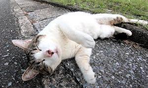 撫でられて伸びる野良猫がカワイイ