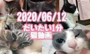 大体一分猫動画 2020/06/12 = 1minute Cat Video =