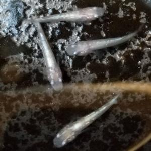 #ダイヤモンドダストvol.3「3回目の採卵」20200619
