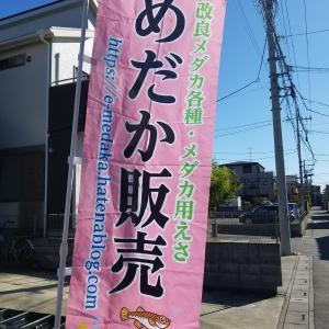 「6月6日(日)伊佐沼公園フリマ出品予定品種その16」
