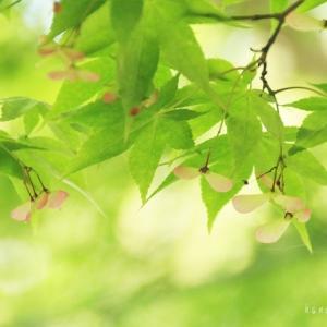 森の小径*朝のベーグルサンド