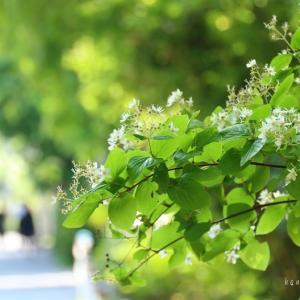 green*彩り朝ごはん