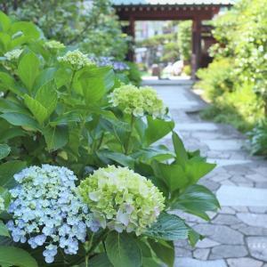 寄り道*鎌倉~お寺のあじさい