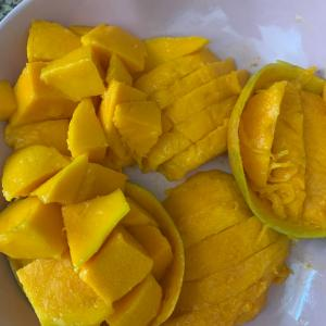 インドでマンゴー食べ放題