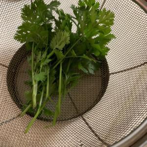 インドといえばの野菜を収穫