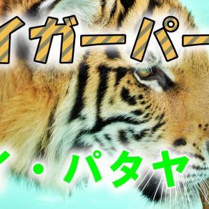 トラに触り放題!「タイガーパーク」に行ってみた!タイ・パタヤ。