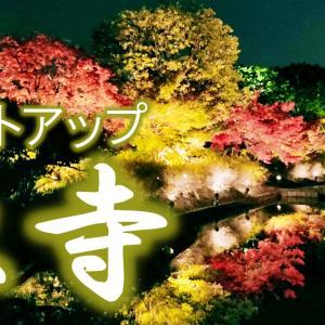秋季限定の東寺のライトアップが最高すぎた! 京都ひとり旅#6