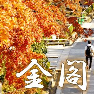 修復工事中で、ひと気のなかった金閣寺で紅葉の庭園を堪能。京都ひとり旅#8。