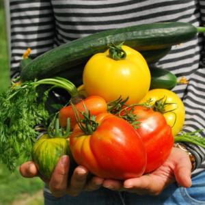 プランター菜園 6月に苗植えする野菜