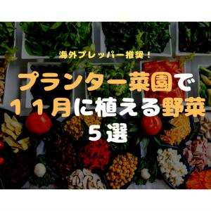 プランター菜園で11月に植える野菜5選【海外プレッパー推奨】
