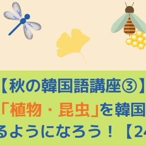 【秋の韓国語講座③】     秋の「植物・昆虫」を韓国語で言えるようになろう!【24選】