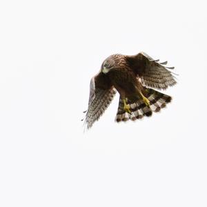 若タカの記録 偵察飛行訓練