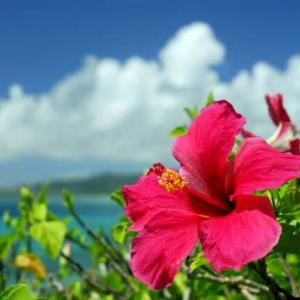 沖縄県での看護師転職に強い!おすすめ転職サイト3選