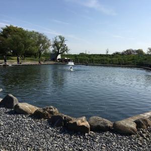 朝霞ガーデン 管釣り定期健診 4月度。桜も散った朝霞で3時間勝負。