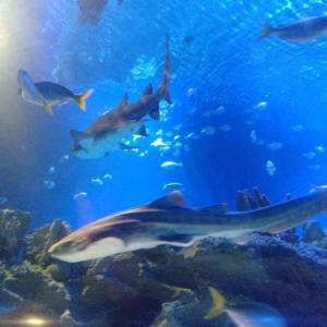 クアラルンプールの水族館*KLCC水族館(Aquaria KLCC)