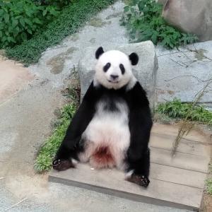クアラルンプールにある国立動物園*Zoo Negara*パンダの巻*