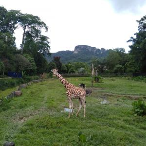国立動物園「Zoo Negara」でのおすすめスポット*キリン・シマウマ・ダチョウ*