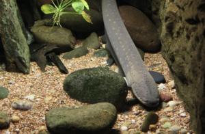 「Slilppery Eel」(2021 年 7 月)