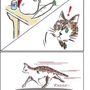 猫ちゃんあるある
