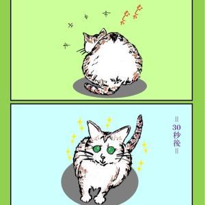 猫ある‥今日は食事