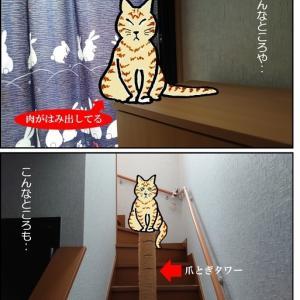 今日は日曜日『猫あるの日』