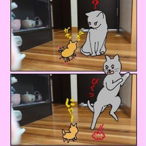 猫ちゃんは おもちゃ が苦手です
