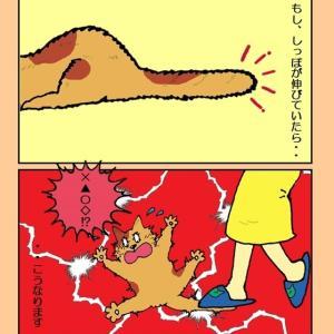 猫ちゃんのしっぽを踏まないで!