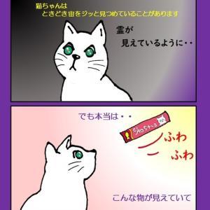 猫ちゃんは宙を凝視して何を見ているのでしょう?