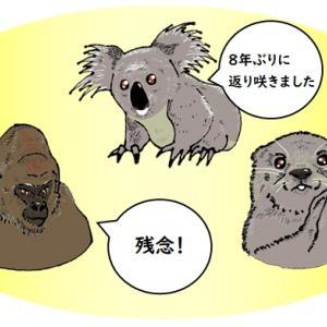 コアラが1位 東山動植物園 人気投票