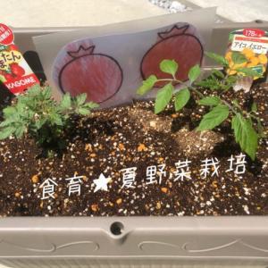 食育!夏野菜栽培とSTAY HOMEから得たこと