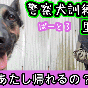 警察犬訓練所に里帰りした犬【完結編】