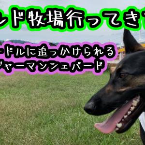 ワールド牧場で休日を過ぎす犬(1)トイプードルに怒られる