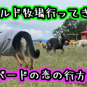 ワールド牧場で休日を過ごす犬(3)悲しみのドッグラン・・・