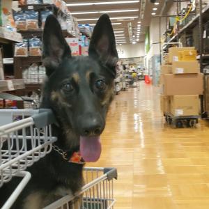 ショッピングする犬