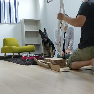 劇的ビ〇ォーアフター!オヤジの書斎を作る犬