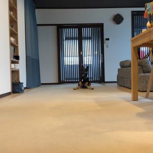 飼い主♀と♂が同時に呼んだらどっちに来るのチャレンジされる犬
