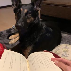 うちの犬に『少年と犬』に登場する多聞の爪の垢を煎じて飲ませたい