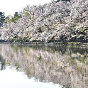 初春の北海道 4日目(東京です)