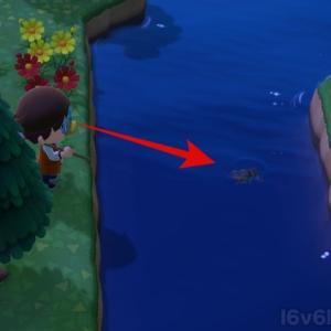 どうぶつの森の「タガメ」がGに見えるが高額で売れる!