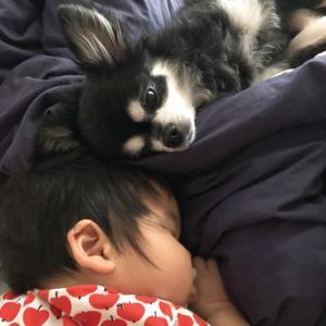 赤ちゃんの寝床事情【せまい我が家バージョン】